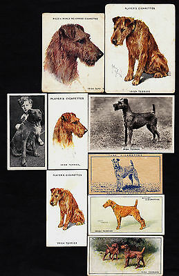 Lot Of 9 Different Vintage IRISH TERRIER Dog Cigarette Cards