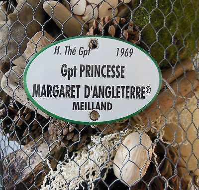 VINTAGE ENAMEL FLOWER GARDEN LABEL SIGN PLAQUE Princess Margaret of England Rose