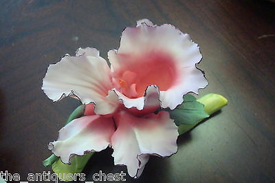Capodimonthe pink and white orchid, ceramic, gorgeous