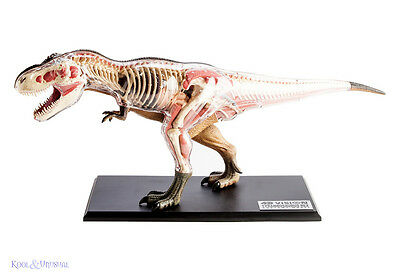 4D Vision LARGE Tyrannosaurus Rex T-REX Dinosaur Anatomy Model with Organs