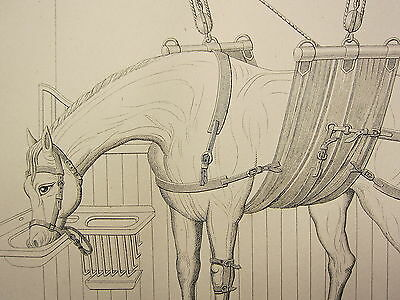 1880 Horse Farriery Print ~ Method Of Slinging The Horse Hobbles For Casting