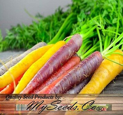 (350) Organic Rainbow Mix Carrot Seeds ~  Combined S&H