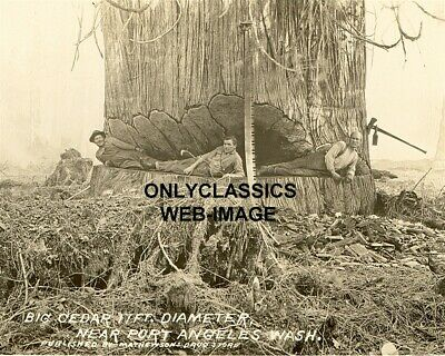 1900's PORT ANGELES WASHINGTON LUMBERJACK MEN 17' CEDAR SEQUOIA PHOTO AMERICANA