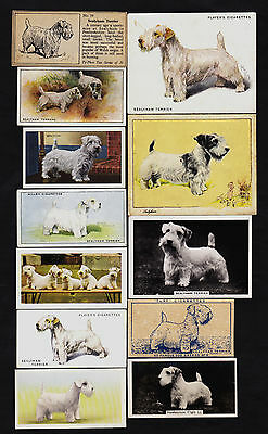 20 Different Vintage SEALYHAM TERRIER Tobacco/Candy/Tea/Promo Dog Cards