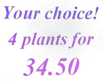 4 Plants For 29.99!!!  Your Choice!!!