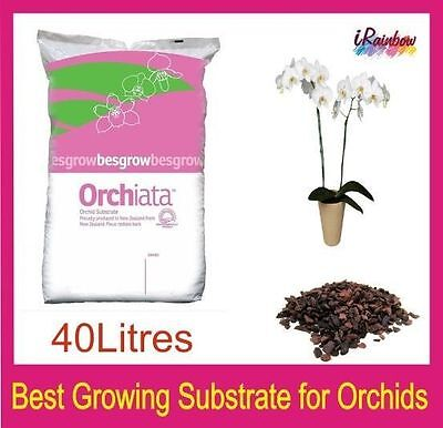 Pinus Radiata Bark 40L - Orchiata Best Growing Substrate for Phalaenopsis
