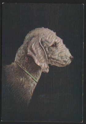 Cigarette card postcard Bedlington Terrier dog 1930's