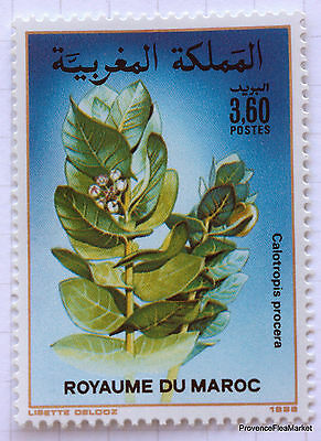 MAROC Yt 1053 Timbre neuf  Flore marocaine - Citrullus colocynthis