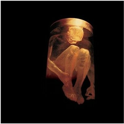 Alice in Chains - Nothing Safe: Best of the Box [New CD]
