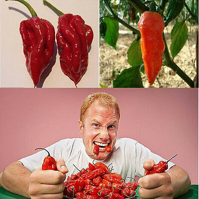20 Bhut Jolokia Ghost Peppers Seeds Chili Rare Sowing Balcony Vegetable Fruithot
