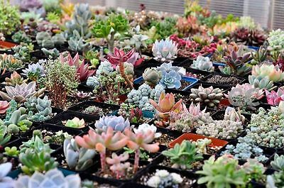1 Pack 60pcs 15 Styles Succulent Seeds Mini Potted Flower Seeds Anti-radiation