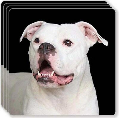 Staffordshire Bull Terrier Rubber Coaster Set