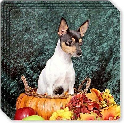 Toy Fox Terrier Rubber Coaster Set