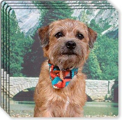 Border Terrier Rubber Coaster Set