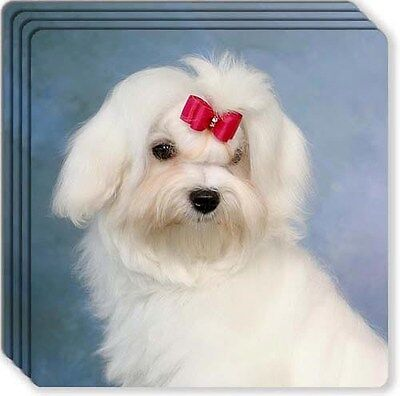 Maltese Rubber Coaster Set