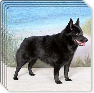 Schipperke Rubber Coaster Set