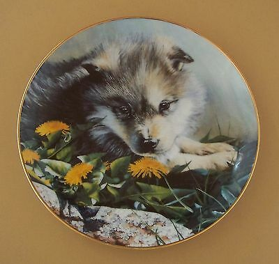 Wolf Pups: Young Faces in the Wilderness TOMORROW'S PRIDE Plate Wolves #1 + COA