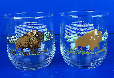 The History of The American Bison Glasses (2)