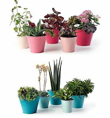 Sophie Conran Set of 5 Steel Ombre Plant Pots - Raspberry Pink or Sea Green