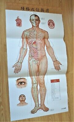 4 posters + Book Acupuncture Pressure Points Poster Meridian Chart Map Acupoints