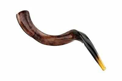 Natual Judaica Kosher 20-24 Inch Yemenite Kudu Shofar Horn Israel-Full pulished