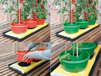 Plant Halo Halos Garden Patio Tomatoes Beans Watering Support Pot Grow Plastic