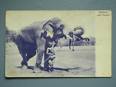 R&L Postcard: Elephant and Trainer, India 1916