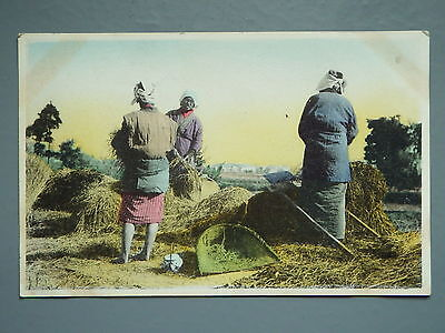 R&L Postcard: Japanese Farming Rural Scene, Women Workers 1916