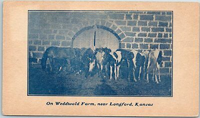 "Longford, Kansas Postcard Horses ""On Weddwold Farm"" PATT'S PRINT SHOP c1910s"