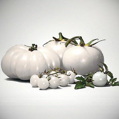 WHITE TOMATO - large meat tomato - approx. 150 Tomatoes Seeds / Pack