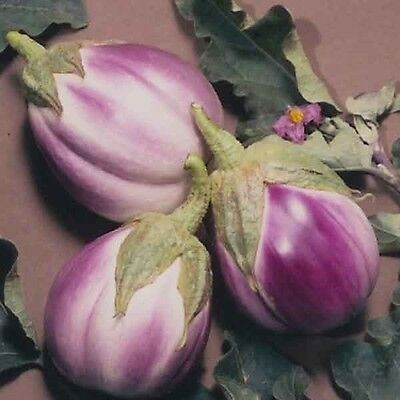 Eggplant Rosa Bianca 60 seeds Heirloom vegetable garden
