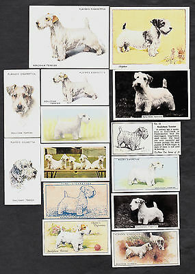 Lot Of 23 Different Vintage SEALYHAM TERRIER Tobacco/Candy/Tea Dog Cards