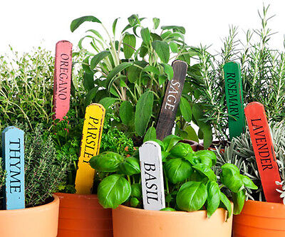 Aromatic culinary herbs and spices 20 different types LOT 2