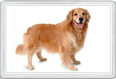 Golden Retriever - Jumbo Fridge Magnet- Dog Pup Pups Puppies Dogs Canine Kennel