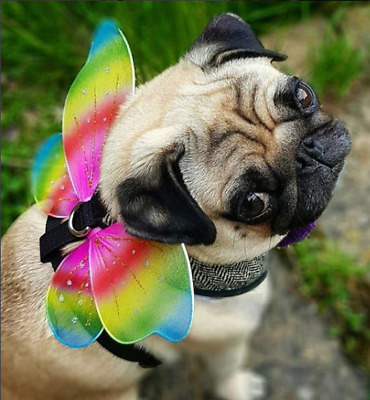 Pet Animal Boy Girl Dog Rainbow Wings Pride Fairy Fancy Dress Costume Outfit