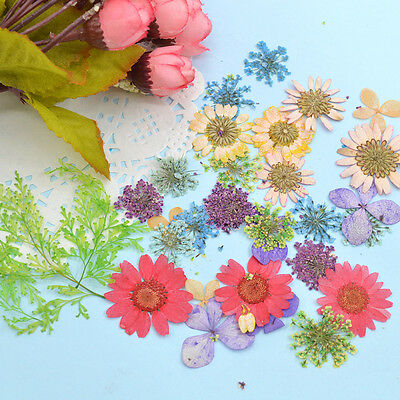 30X Mixed Real Dried Dry Flowers Petal For DIY Handcraft Book Card Decor Random