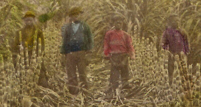 Antique Edwardian African American Children Hand Colored Stereoview Rare Photo