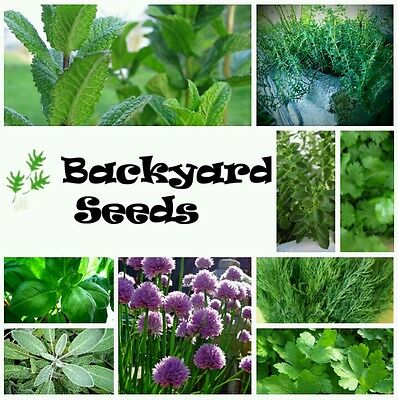 Heirloom Herb Seed Collection (10 packets) basil, coriander, parsley & more