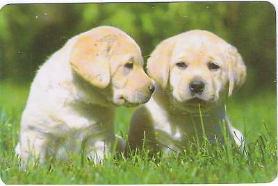 2 Puppies -  Dogs  *cute* - Deck Of 52 Playing Cards & Jokers Unused