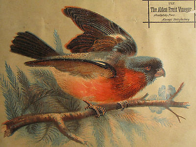 Antique Victorian American Oil Chromolithograph Print Style Of Audubon Boston