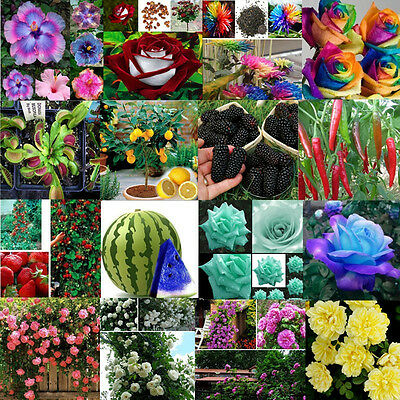 Wholesale Planters Fruits Exotic Succulent Seed Flowering Climbing Home Garden