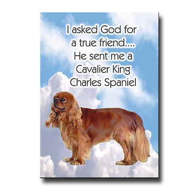 CAVALIER KING CHARLES SPANIEL True Friend From God MAGNET No 4