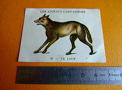 Chromo 1939 Casino Les Animaux Carnassiers N°78 Le Loup
