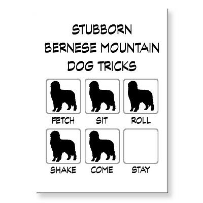 BERNESE MOUNTAIN DOG Stubborn Tricks FRIDGE MAGNET Steel Case Funny