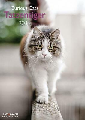 CALENDRIER 2016 -29,7x42 - CURIOUS CATS