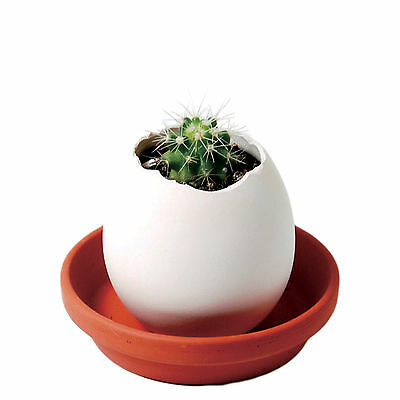 Easy & Fun Easter Eggling – Grow your Plant Kit – Cactus