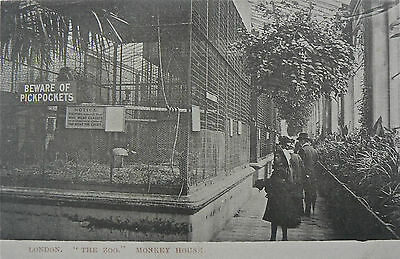 VINTAGE POSTCARD.LONDON ZOO.TOPOGRAPHICAL CARD. EARLY 1900's.THE MONKEY HOUSE