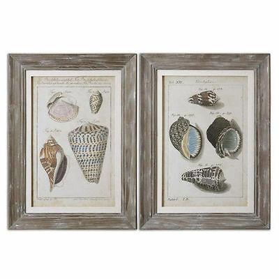 Uttermost Vintage Shell Study Framed Art (Set of 2) Print / Painting