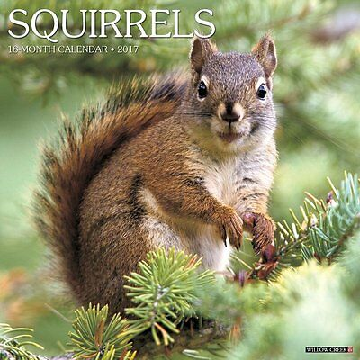 2017 Squirrels Monthly Wall Calendar - Animal Acorn Nuts Photography Nature Cute