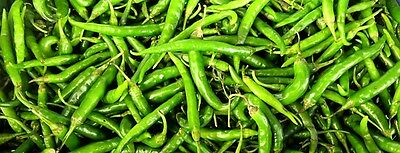 Hot Indian GREEN CHILLI SEEDS (25 seeds)